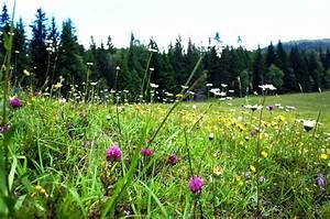 Bilder Blumen Kostenlos Downloaden : blumen auf almwiese lizenzfreie fotos bilder kostenlos herunterladen ohne anmeldung ~ Frokenaadalensverden.com Haus und Dekorationen