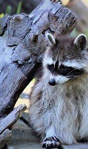 Other Animals Album   Jukani Wildlife Sanctuary ...