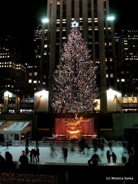 the christmas tree store new york best template collection