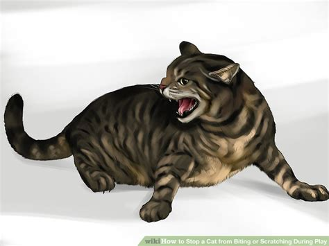 ways  stop  cat  biting  scratching  play