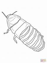 Cockroach Hissing Coloring Madagascar Drawing Pages Clipart Printable Drawings Outline Giant Template Supercoloring Clipground Sketch Sheets Paper Getdrawings Categories sketch template