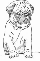Pug Coloring Dog Pugs Bestcoloringpagesforkids Squishy Animal Puppy Sheets Funny Drawing Super Unicorn Simple Them sketch template