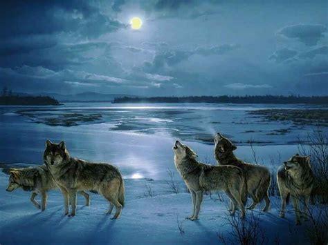 lobos aullando  la luna en hd lanaturalezaes