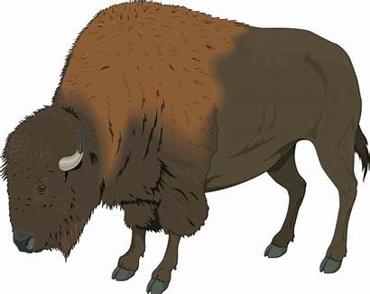 Bison Clipart Clip Buffalo Transparent Vector Badger