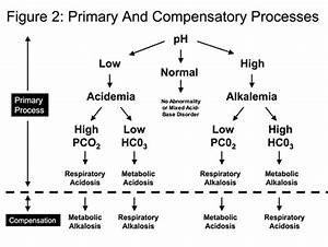 Blood Gas Interpreter And Interpretation Practice Generator  U2013 My Lab Science Blog