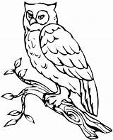 Owl Coloring Owls Pages Snowy Flying Barn Printable Drawing Realistic Sheets Animal Getcolorings Clipartmag Getdrawings источник Adults Colorings sketch template