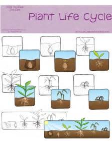 Plant Life Cycle Classroom Freebies