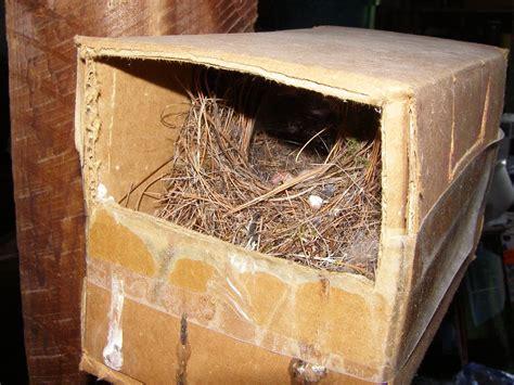 blue jay barrens bird nests