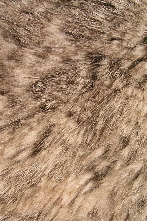 Animal Fur Wallpaper - animal fur iphone wallpaper iphone wallpapers