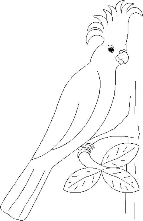 parrots coloring pages    print