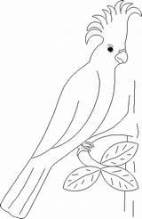 Parrot Coloring Pages Parrots Animal Birds Print Animals Coloringpages1001 sketch template