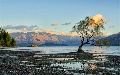 lone tree  lake wanaka alex novickovs photoblog