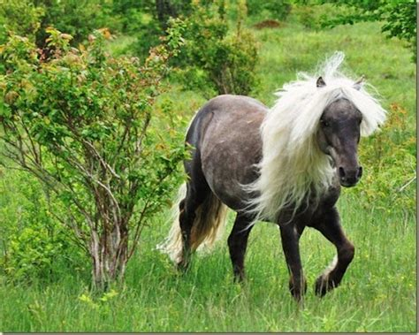 Grayson Highlands Wild Ponies