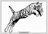 Tigre Imprimir Dibujo Coloring Pintar Dibujos Geometric Tiger Library Rincon Patterns Popular Tigres sketch template