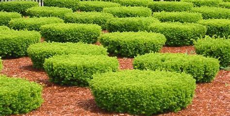 low maintenance shrubs low maintenance shrubs for backyard interior design inspiration