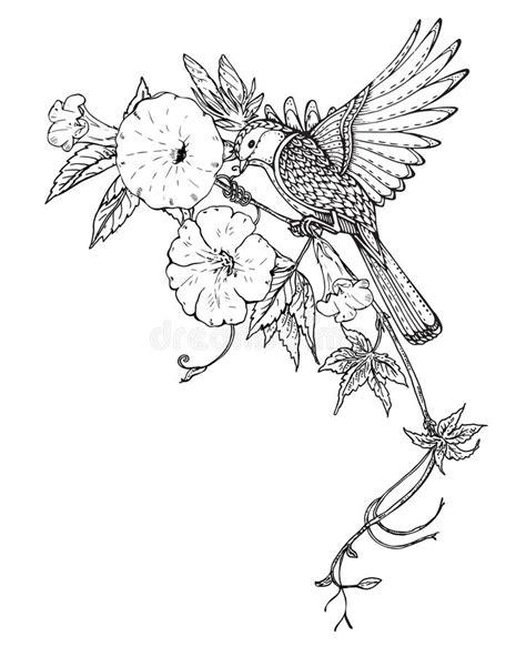 Vector Illustration Of Hand Drawn Graphic Bird On Bindweed Flowe Stock Vector - Illustration of
