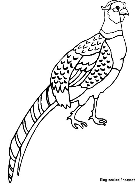 pheasant coloring page farm animal coloring pages