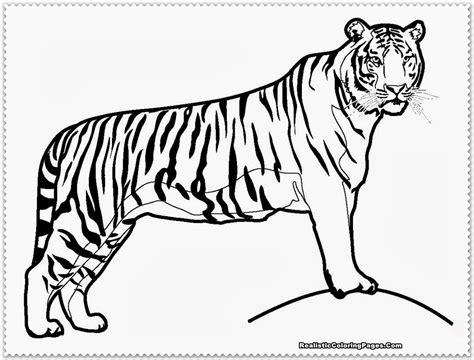 Coloring Harimau by Realistic Tiger Coloring Pages Realistic Coloring Pages