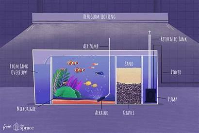 Refugium Aquarium Saltwater Building Instructions Diy Fill