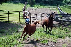 Maryland Horse Rescue Farm Names 8 Rescued Horses with a ...
