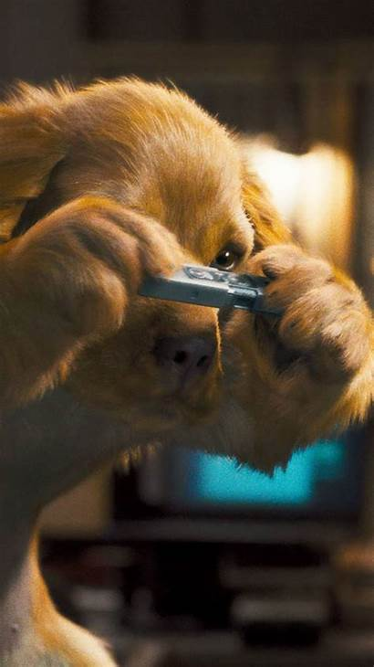 Iphone Dog Wallpapers Ipad Desktop