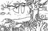 Forest Coloring Pages Landscape Rainforest Adults Printable Mountain Spring Clipart Animals Simple Detailed Kelp Getcolorings Wecoloringpage Aldults Both Getdrawings Whitesbelfast sketch template