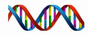 Dna markers pdf