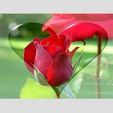 valentines-background-hd