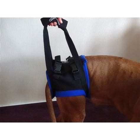 walkabout hundegehhilfe tragehilfe fuer hunde