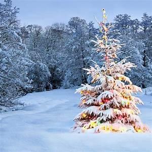 Printed, Outdoor, Snow, Christmas, Tree, Lights, Backdrop