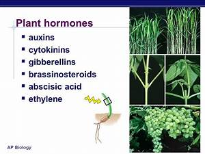 Lecture #55 Plant Responses - ppt video online download
