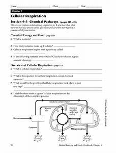 Cellular Respiration Worksheet For 9th