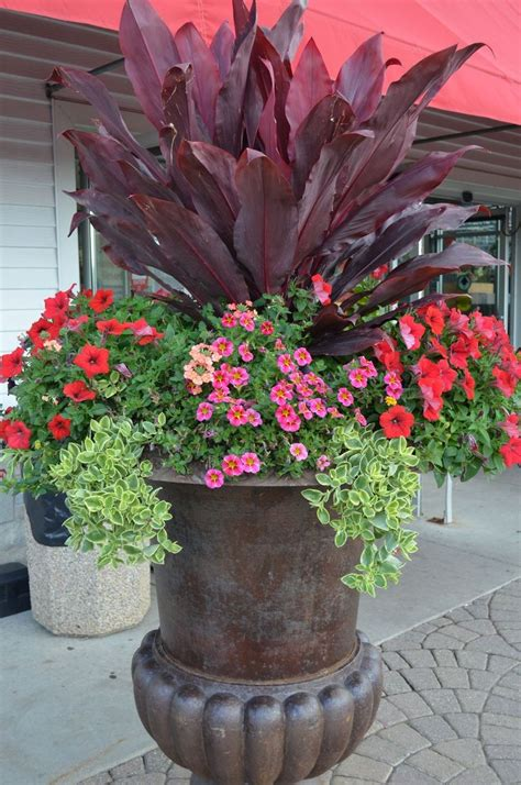1000+ Images About Potted Plants Container Plants On