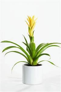 Plante Tropicale D Intérieur : plantes d 39 int rieur qui fleurissent l 39 hiver ~ Melissatoandfro.com Idées de Décoration