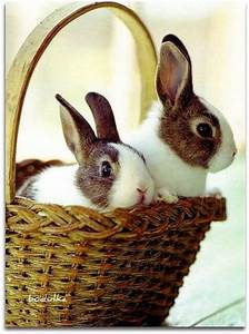 Bunnies, In, A, Basket, Pictures, Photos, And, Images, For, Facebook, Tumblr, Pinterest, And, Twitter