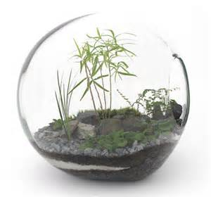 terrarium design modern terrariums design milk
