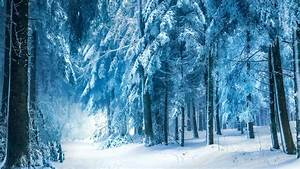 Winter landscape, snow forest Wallpaper