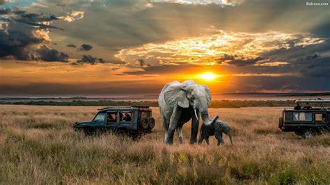 Wallpaper Desktop Hd by Elephant Hd Desktop Wallpaper 29725 Baltana