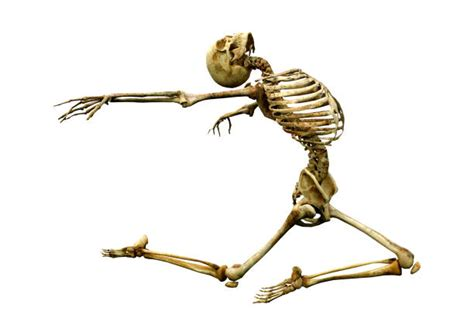 dancing skeleton stock  pictures royalty