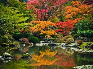 Maple Viewing Festival at Seattle Japanese Garden, Oct. 15 ...  Maple