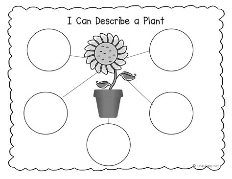 2nd grade science worksheets on plants worksheets for all