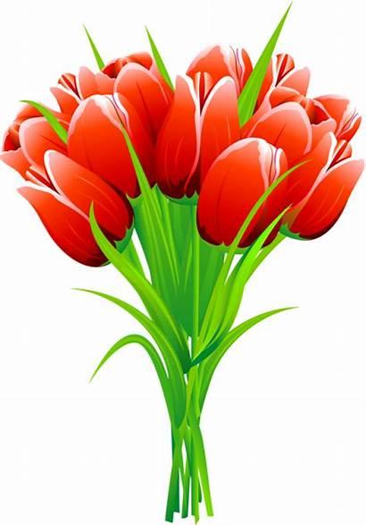 Tulip Tulips Bouquet Clipart Flowers Flower Spring