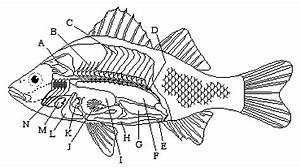 8 Best Images Of Fish Labeling Worksheet