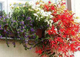 Sommerblumen Für Schatten : sommerbepflanzung balkon balkonbepflanzung im sommer ~ Michelbontemps.com Haus und Dekorationen