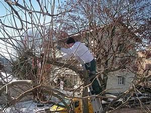 Bäume Schneiden Wann : bume beschneiden cheap baumschnitt baumpflege korb ~ Lizthompson.info Haus und Dekorationen