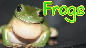 Hopping Frogs - A Look At The Amazing Frog