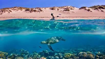Beach Turtle Desktop Wallpapers Mac Macbook