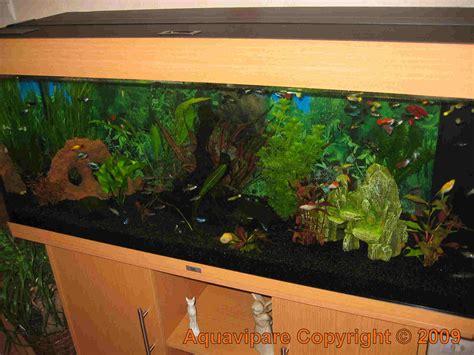 nouvelles photos aquarium juwel 240