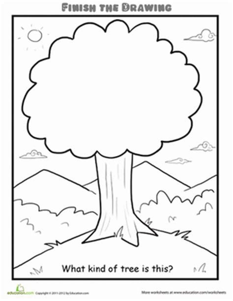 finish the drawing what kind of tree is this worksheet education com