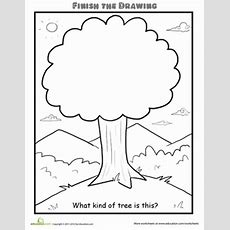 Finish The Drawing What Kind Of Tree Is This?  Worksheet Educationcom